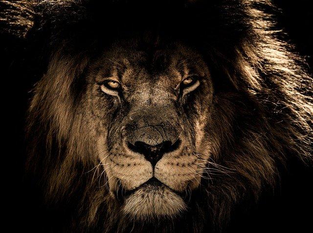 Como conquistar um leonino